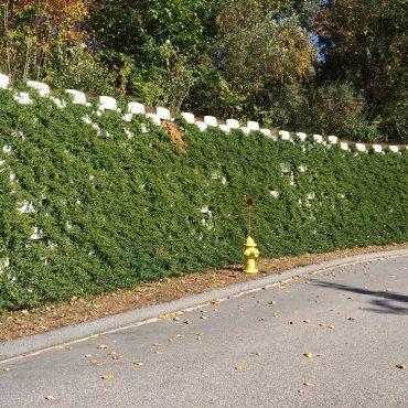 Living retaining wall